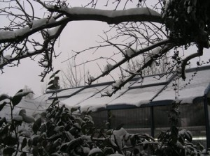 Winterstimmung am Gewächshaus